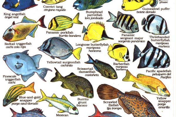 Fishes Baja California
