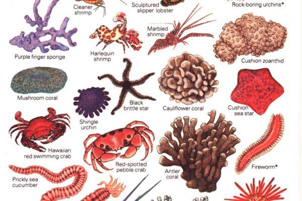 Marine Invertebrates Hawaii