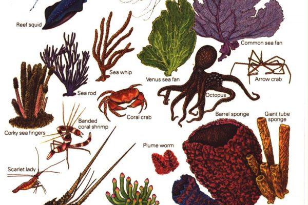 Marine Invertebrates Tropical Atlantic